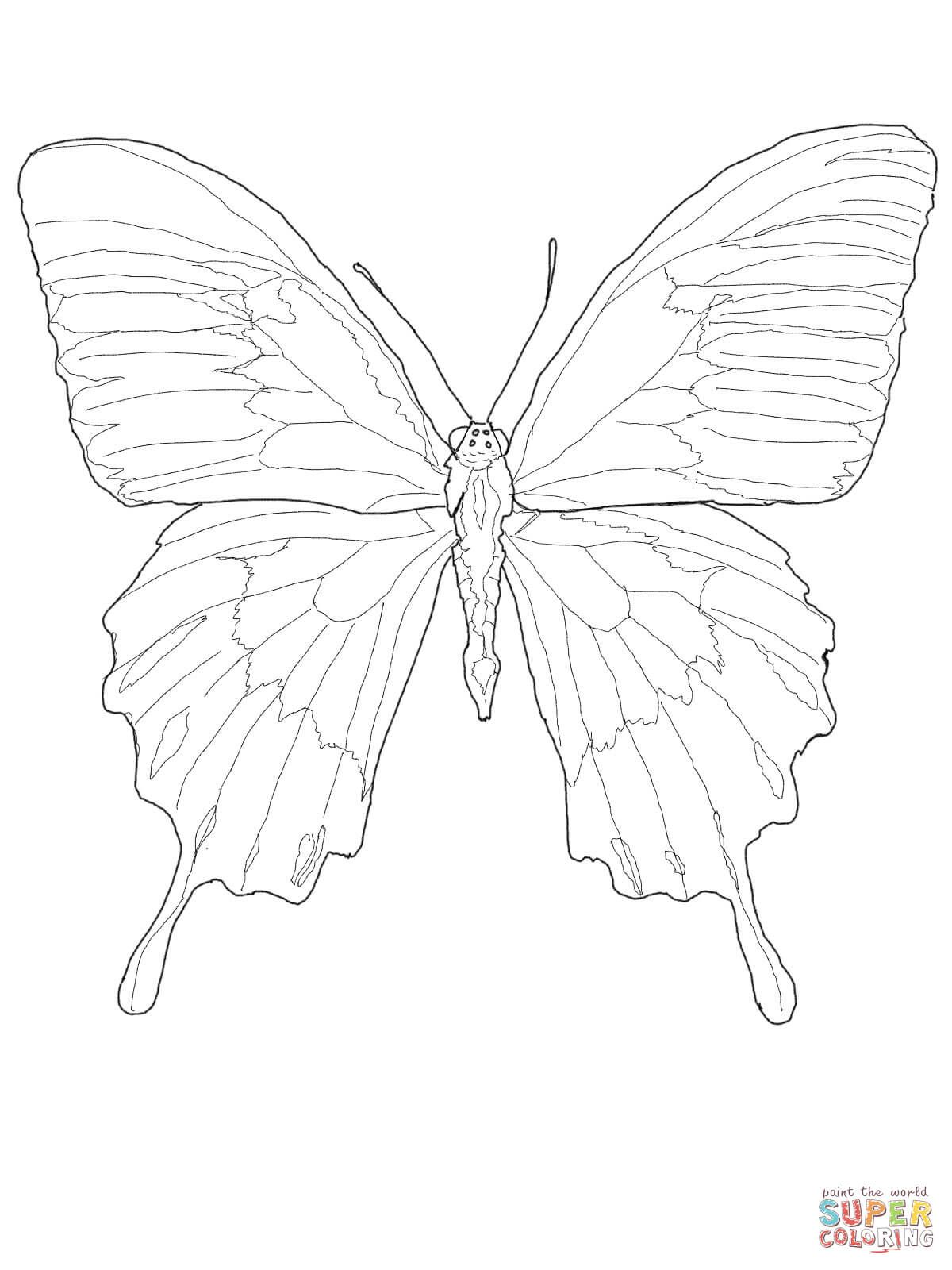 Ulysses Butterfly Super Coloring Butterfly Coloring Page Butterfly Drawing Butterfly Sketch [ 1600 x 1200 Pixel ]