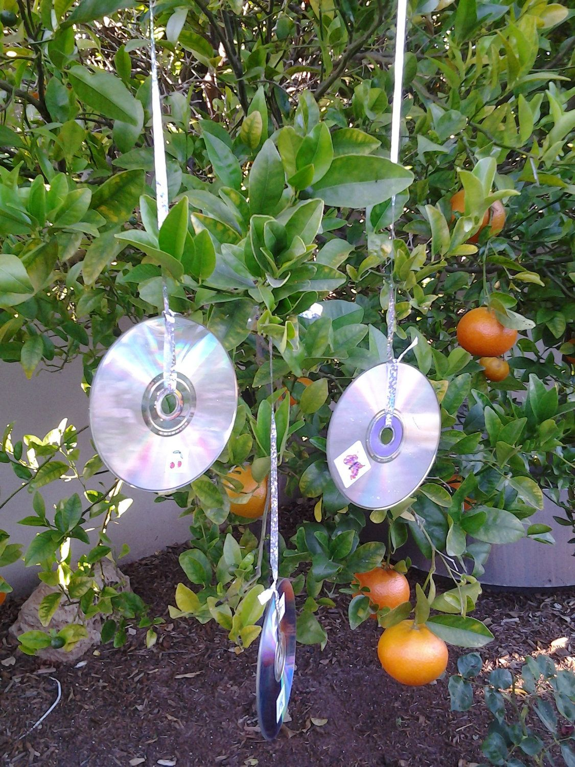 Upcycled cd 39 s recycled garden art bird deflectors pest for Recycled garden art ideas