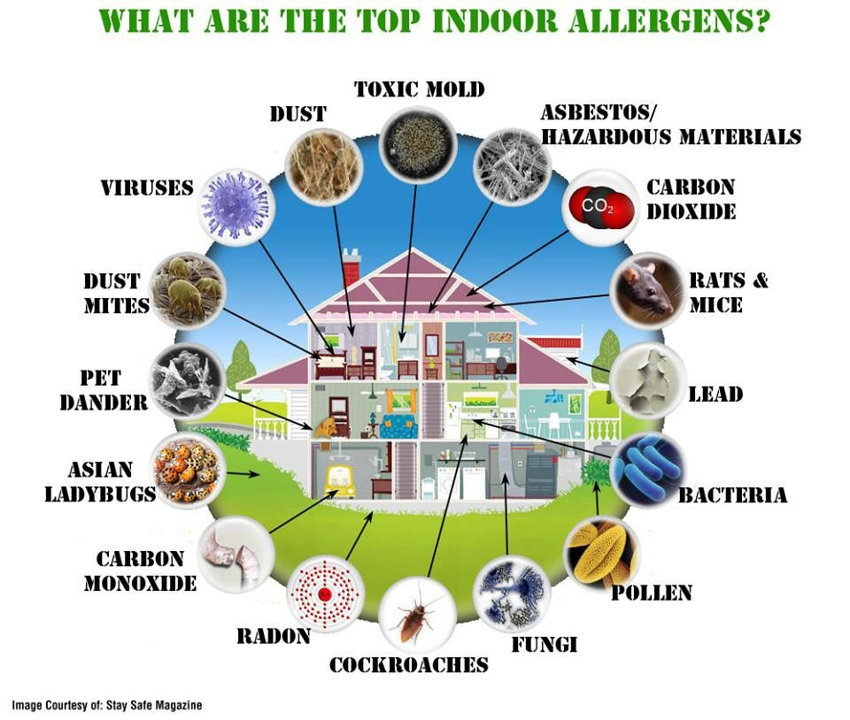 What are the top indoor allergens and how do you deal with