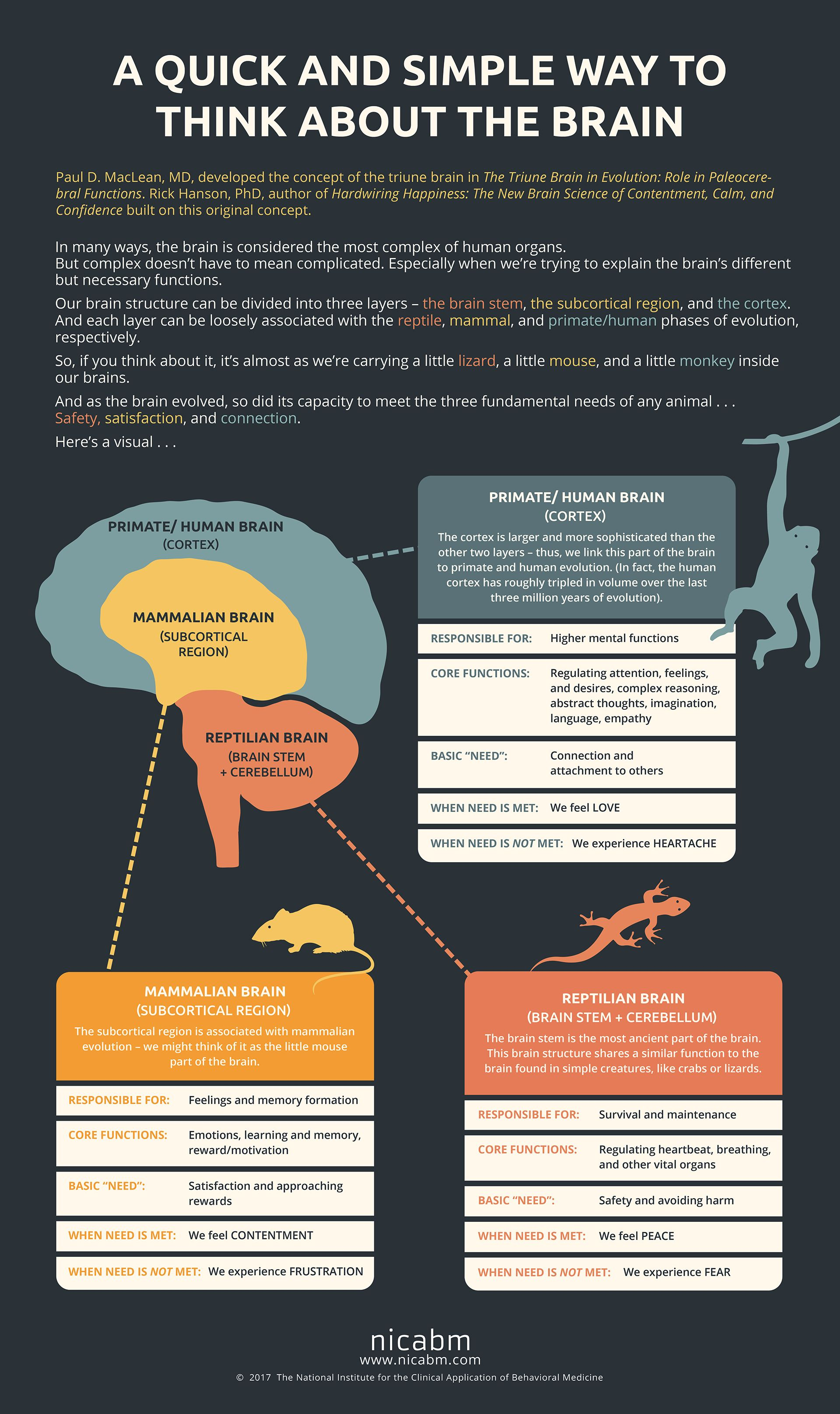 A Quick and Simple Way to Think About The Brain | inspiring stuff ...