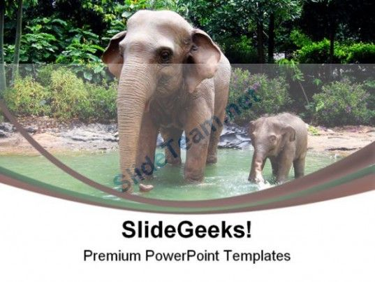 Jungle elephant animals powerpoint templates and powerpoint check out this amazing template to make your presentations look awesome at toneelgroepblik Gallery