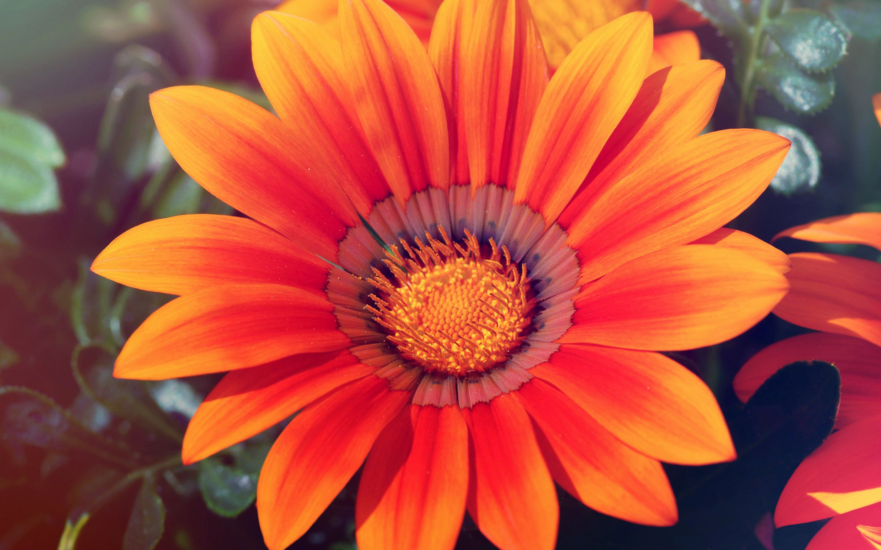 Sommerblume Spring Flowers Photography Red Sunflowers Sunflower Wallpaper