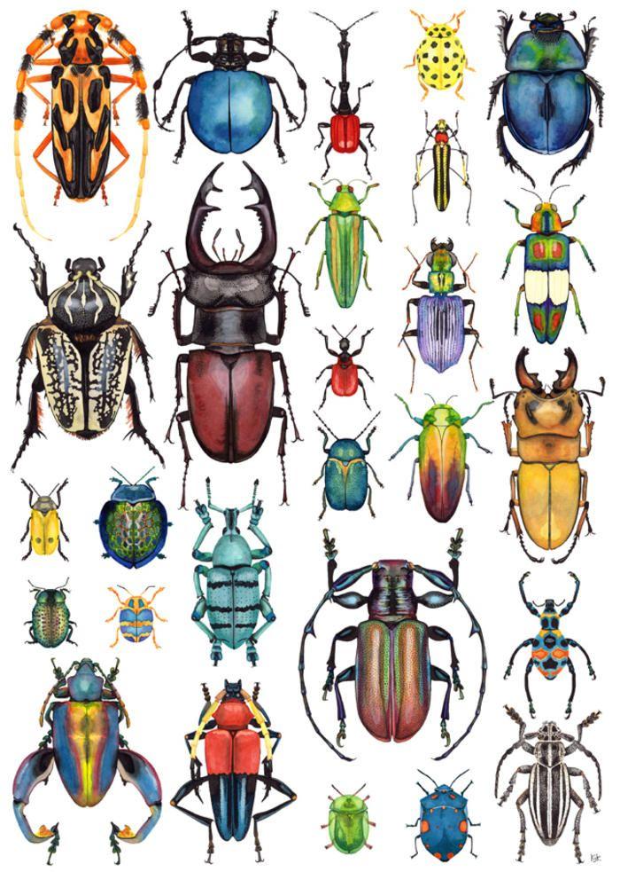 large beetle art - Google Search | Escarabajos | Pinterest ...