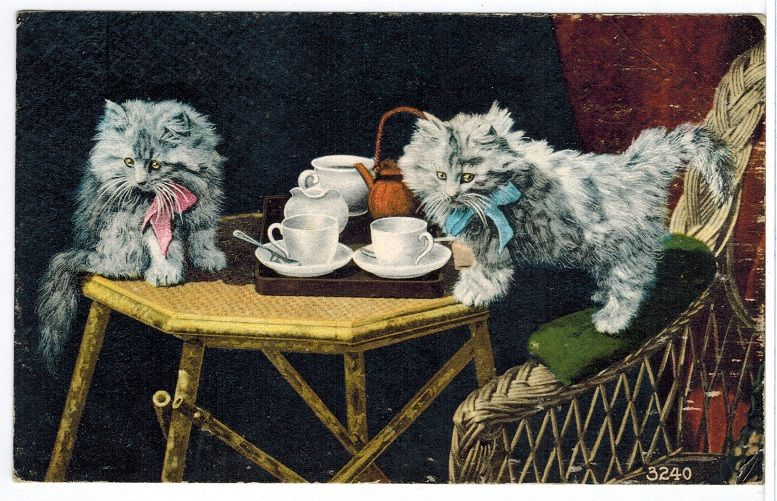 Antique Old Real Photo Cat Postcard Kittens [100611] - $5.69 : Old Postcards In Time, Online source for old and antique postcards