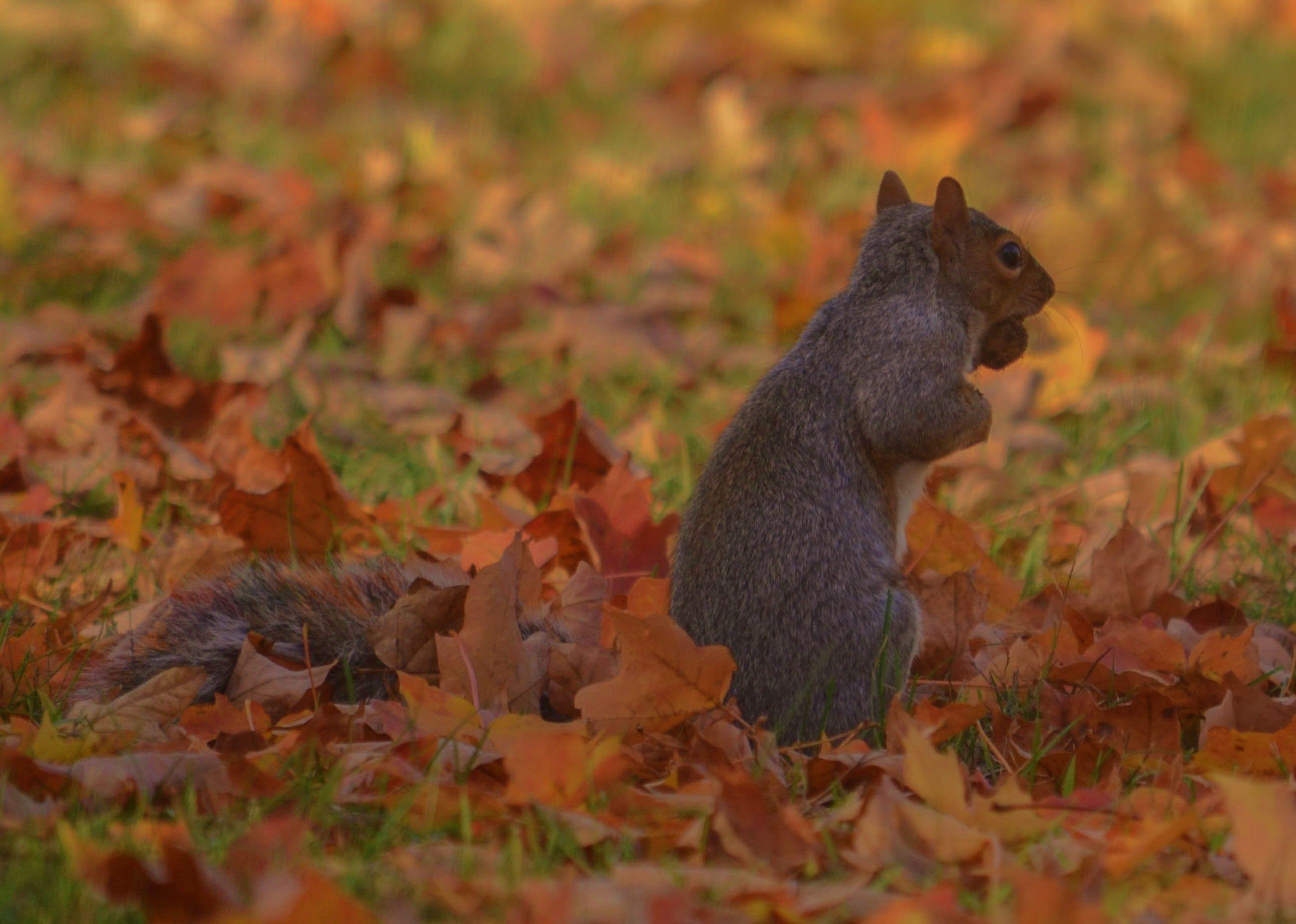 Morristown NJ Weather blog, Weather photos, Squirrel