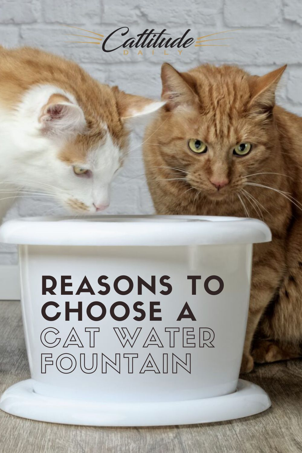 Why Cat Water Fountains Are A Better Choice Than Bowls In 2020 Cat Water Fountain Cats Cat Drinking