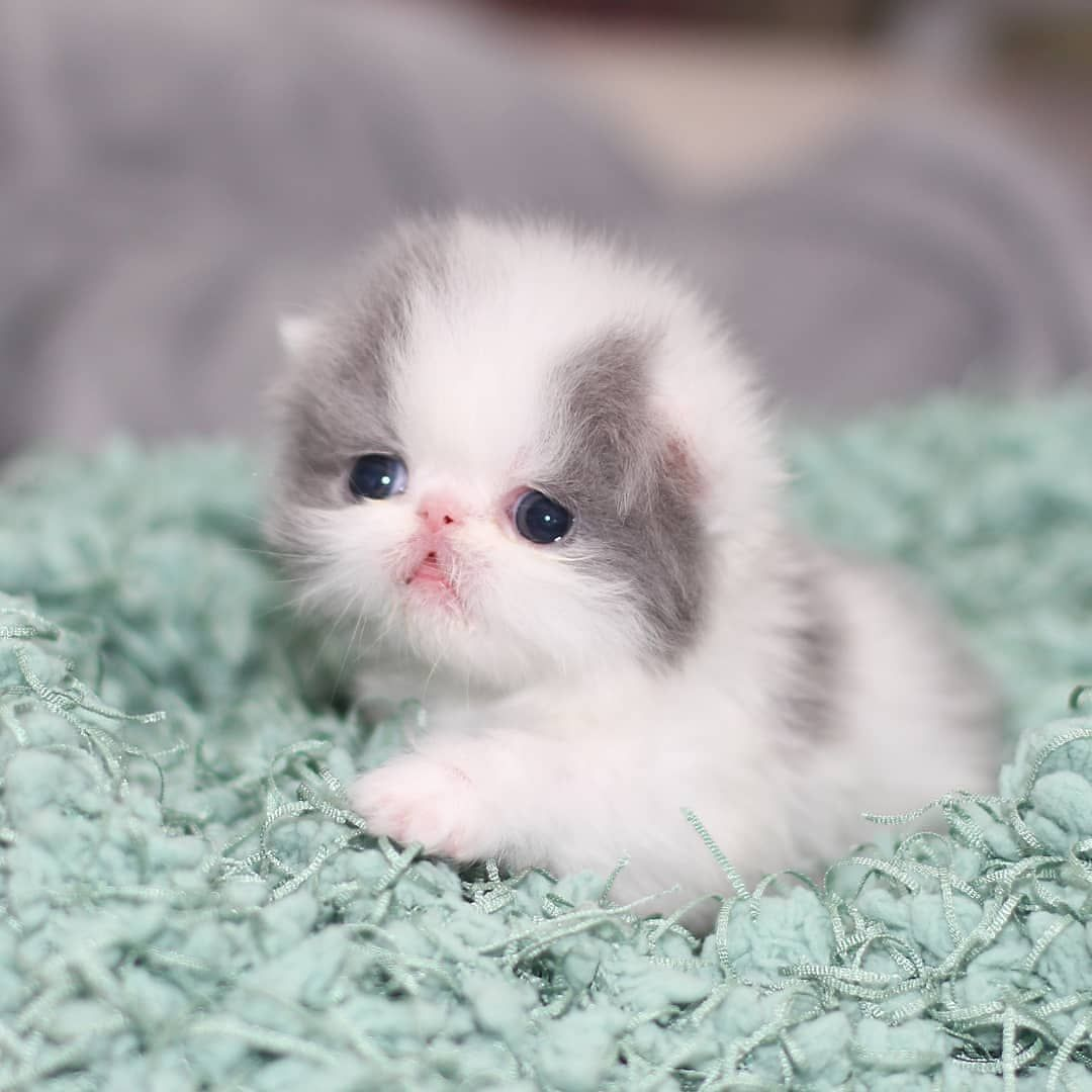 Adorable Kitty Baby Cats Cute Cats And Kittens Cute Animals