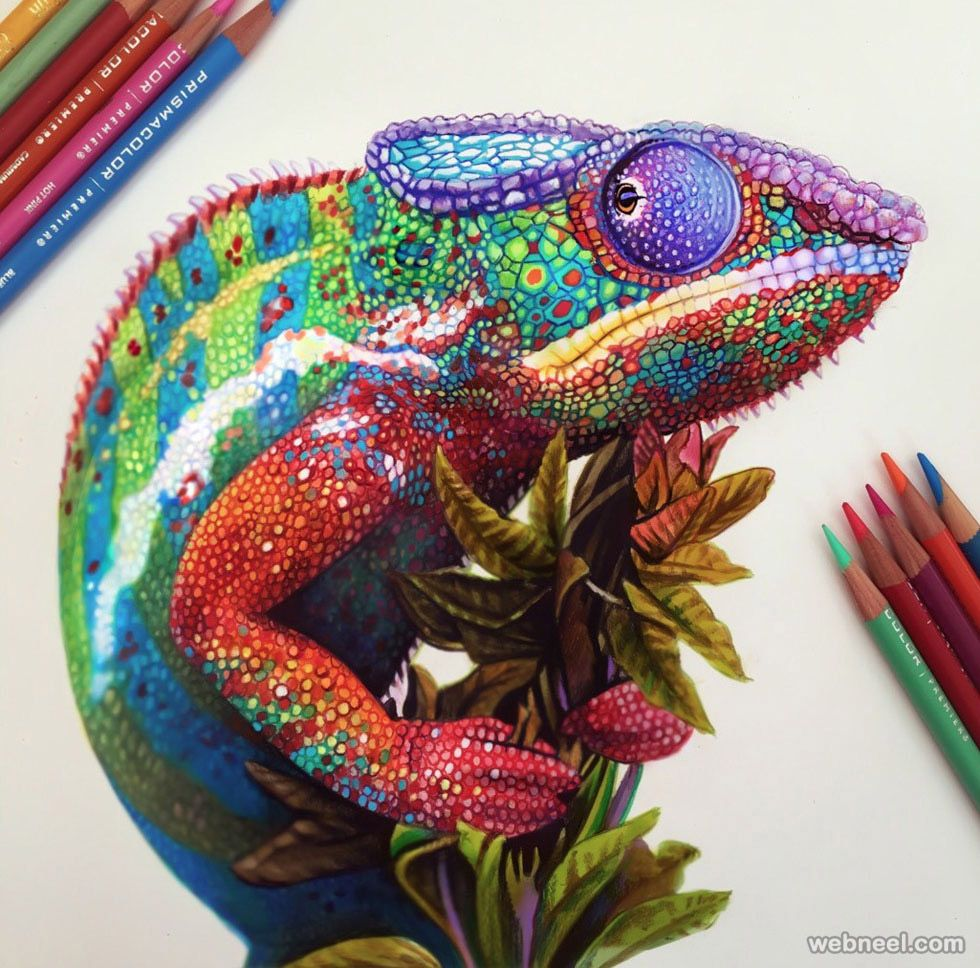 25 amazing chameleon pictures - 25 Stunning And Realistic Color Pencil Drawings By Morgan Davidson Read Full Article Http