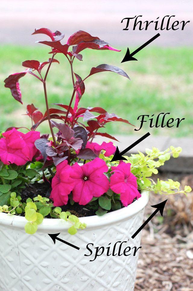 Front Yards · Planting Flower Pots Thriller Spiller Filler   Container  Gardening Ideas