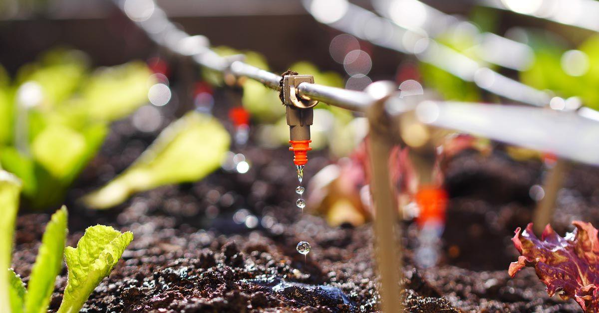 Verticale Tuin Maken : Een verticale tuin zelf maken creatief de lucht in met groen