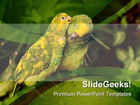 Love Birds Animals Nature PowerPoint Templates And PowerPoint - nature powerpoint template
