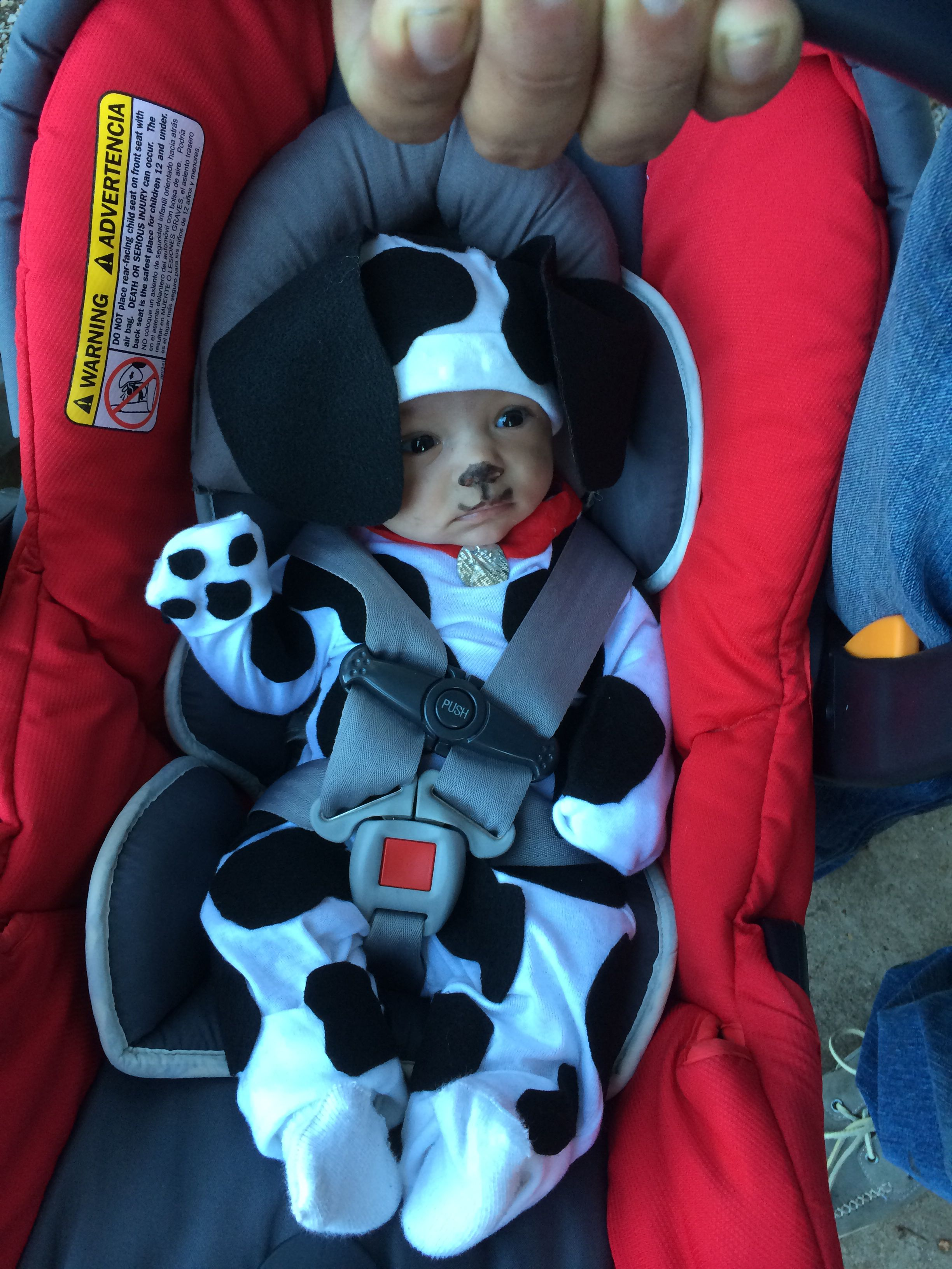 diy newborn dalmatian costume - inspiration for d's costume