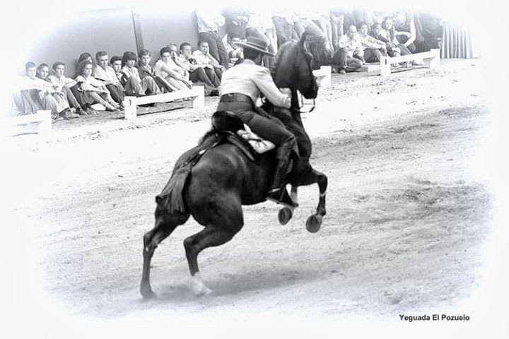 """""""¿Qué es la reunión? Es el máximun de doma. Es el equilibrio perfecto. Los riñones, las ancas, las patas, están en flexión. Las piernas ponen bellamente la masa hacia delante; las espaldas quedan libres y móviles; el cuello alto; la mandíbula obediente fácilmente a los dedos; todas las partes del caballo concurren a formar un conjunto bello y armónico. Permite al jinete disponer de su caballo a la menor indicación."""" Antonio Miura. """"Doma acozo y derribo"""" (de las notas de James Fillis)."""