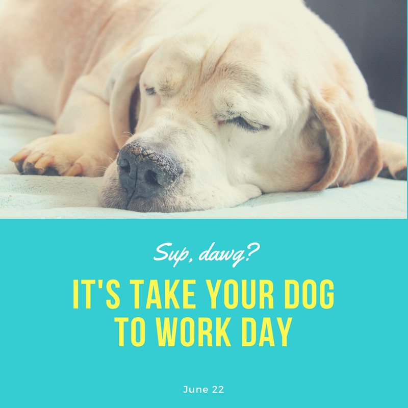 Take Your Dog To Work Day Stylish Paws Your Dog Pet Holiday Dogs