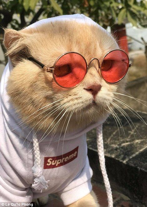 Pet cat dressed like an emperor minds a seafood stall in