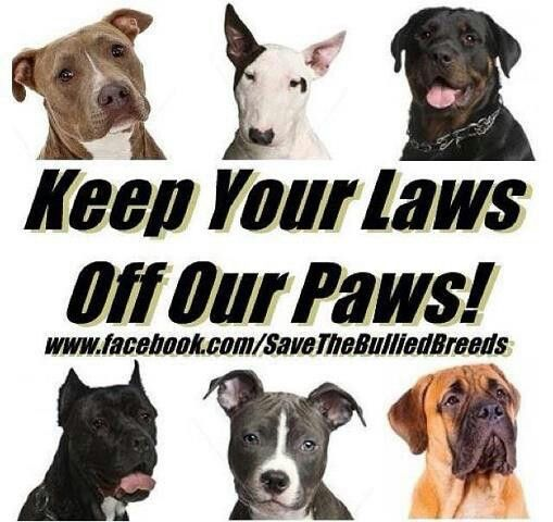 Save The Bully Breeds Keep Your Laws Off Our Paws Pitbulls