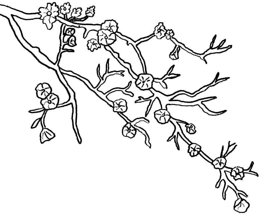 Charming Cherry Blossom Coloring Pages | Download Free Printable Coloring Pages