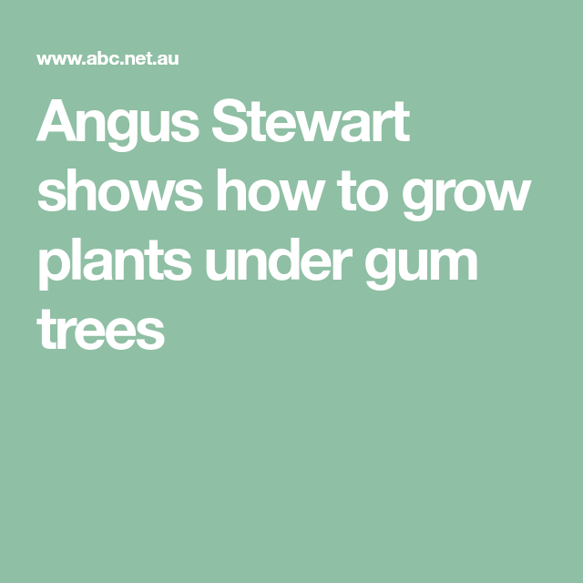 Angus Stewart shows how to grow plants under gum trees ...