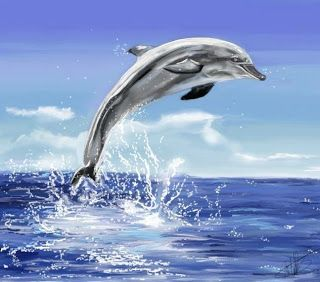 skyenimals an animal blog for kids why i love dolphins and you