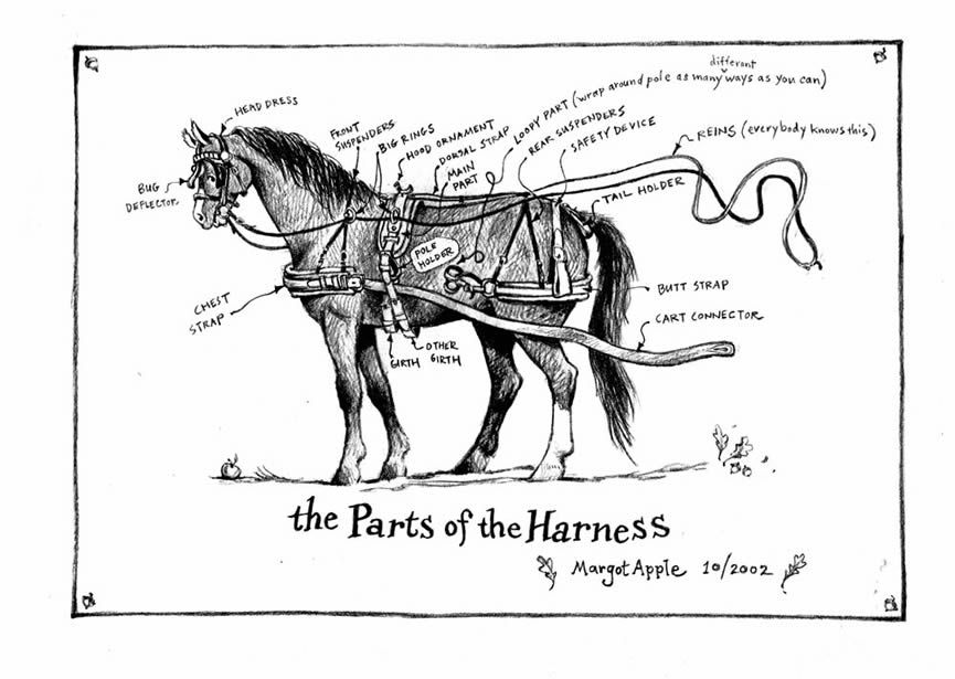 Fun Way To Describe Horse Harness Parts Helpful For If We