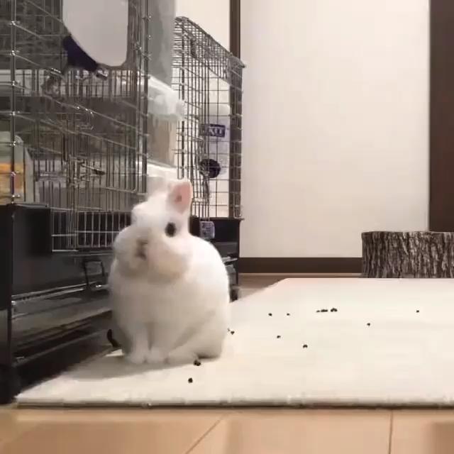 Rabbit Cage Calculator (Rabbit Care Guide) #thepetsupplyguy #pet #pets #animal #rabbit #rabbits #bunny #bunnies Video Credit: Rabbit Cage Outside @setsu.0315 on IG