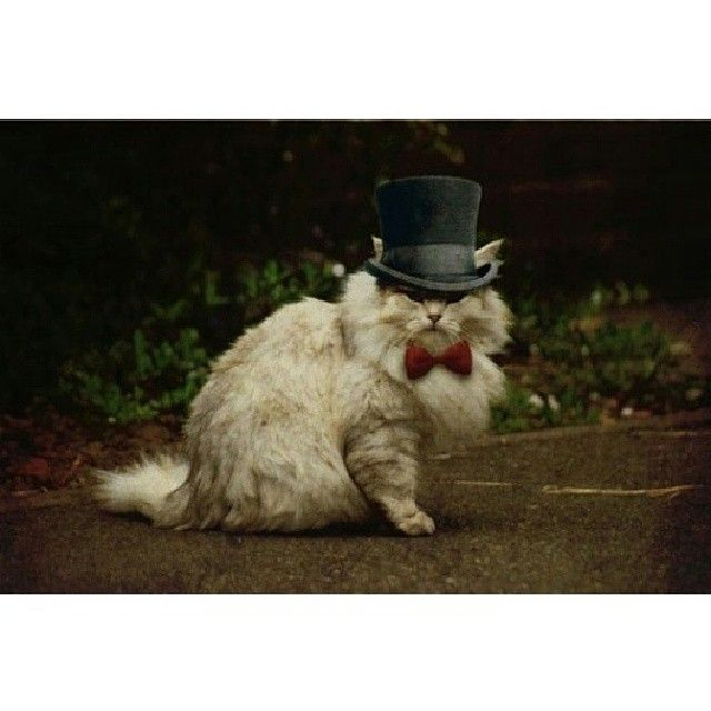 Happy caturday :) #steampunk #caturday #cat #tophat www.steampunktendencies.com