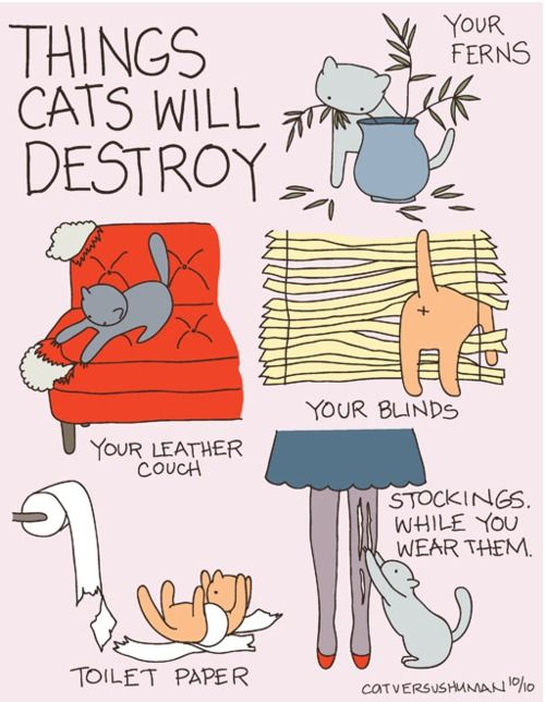 Things cats will destroy