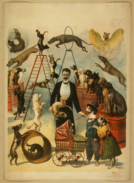 circus, classic posters, free download, graphic design, magic, movies, retro prints, theater, vintage, vintage posters, Trained Dog Act - Vintage Dog Circus Poster