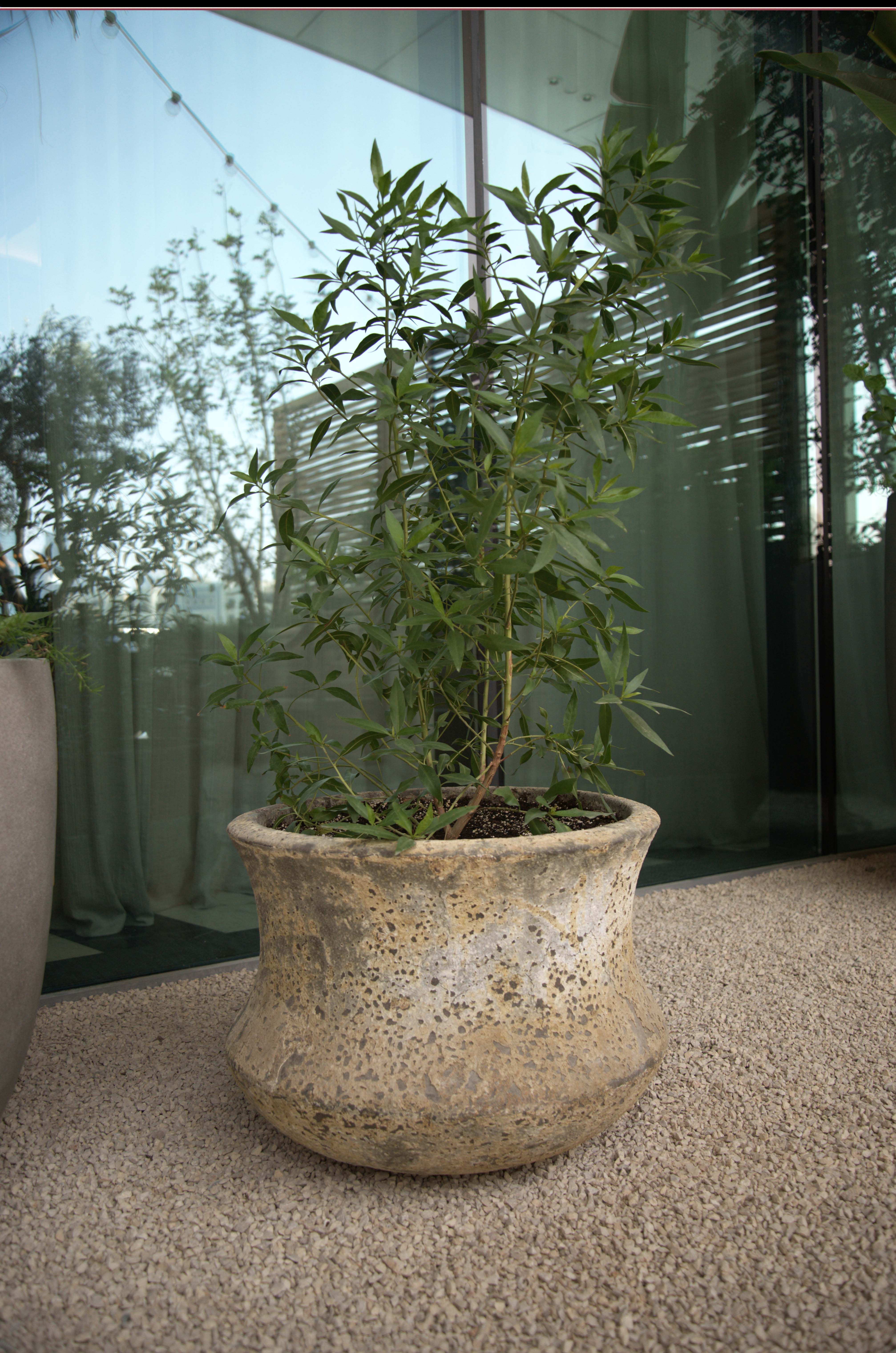 Bring serenity to your Gardens with Plants & Planters