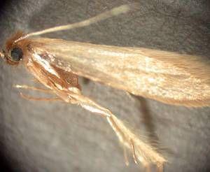 Kleidermotten Bekampfen Kleidermotten Motten Im Kleiderschrank Motte
