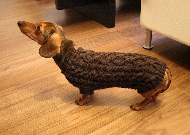 Free Knit Dog Sweater Pattern Dogs Pinterest Dog Sweater