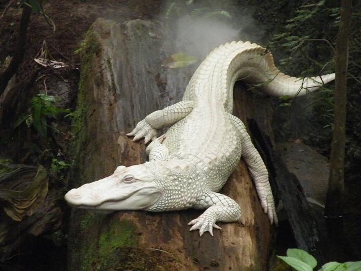 Albino animals Albino animals More white q #albinos #amphibians #Animals #albinoanimals