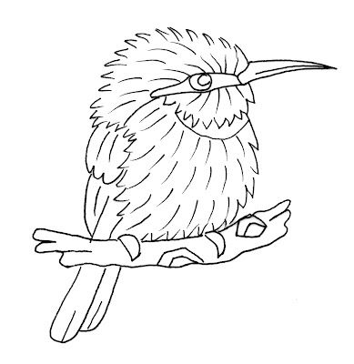 Bee Eater Colouring Background