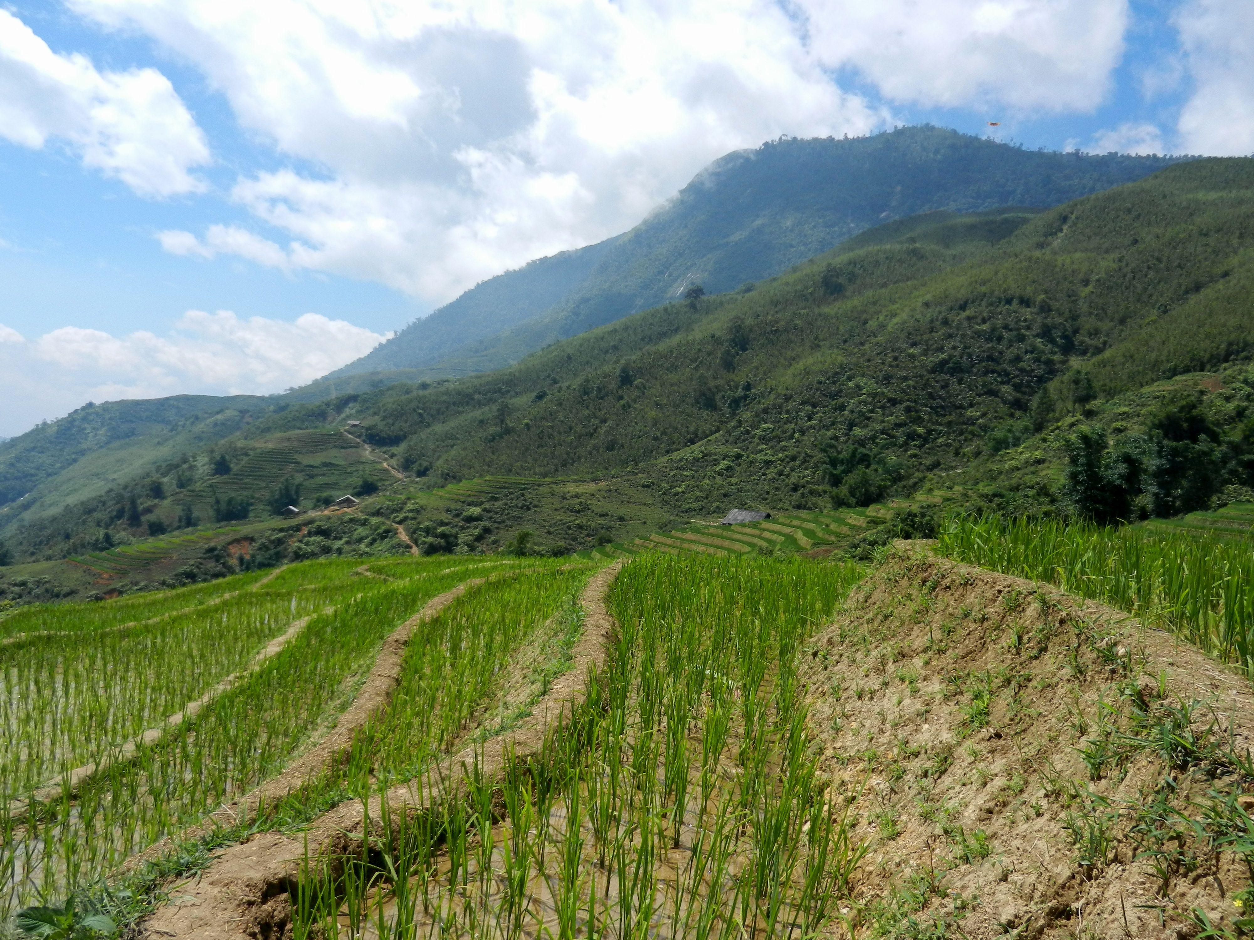 Rice fields of Sa Pa, Vietnam