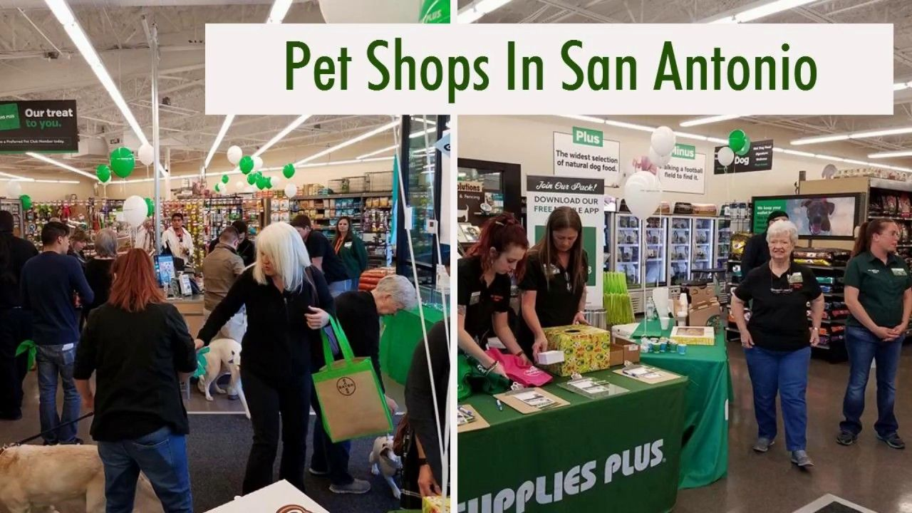 Pet Supplies Plus Is One Of The Best Pet Shops In San Antonio Tx