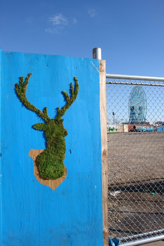 Diy moss grafitti moss graffiti street art love street art