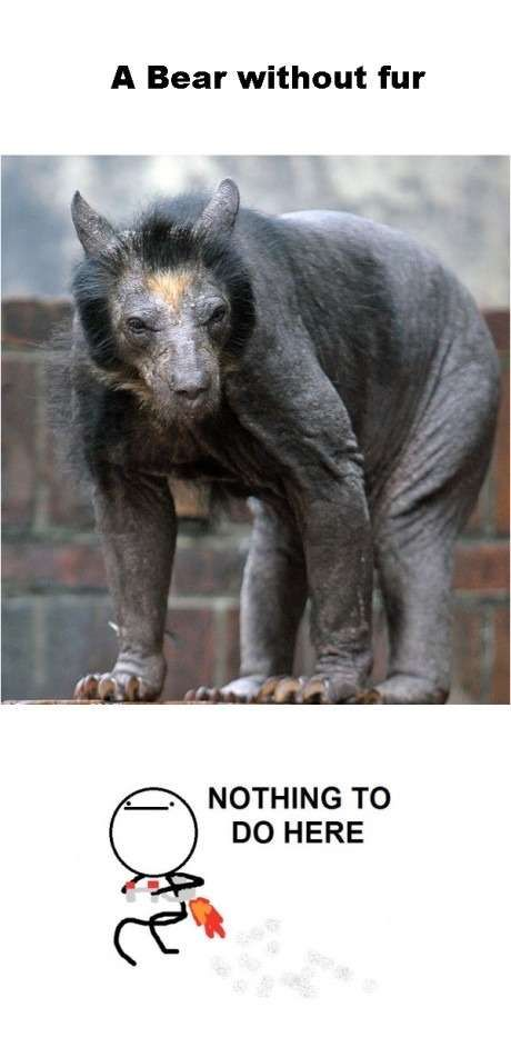A Bear Without Fur That Is All Lolsnaps Bear Without Fur Weird Animals Animals