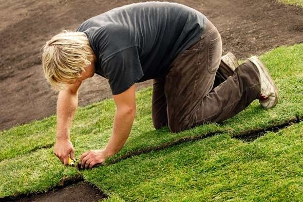 How To Plant A New Lawn From Seed Or Sod The Garden Glove St Augustine Grass Spring Lawn Care Lawn