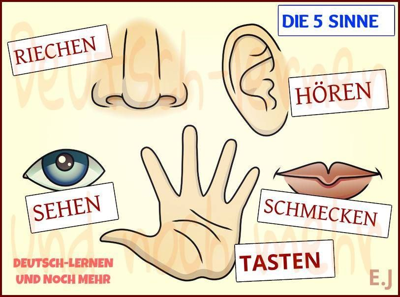Verben - Die 5 Sinne | Deutsch | Pinterest | German and Learn german