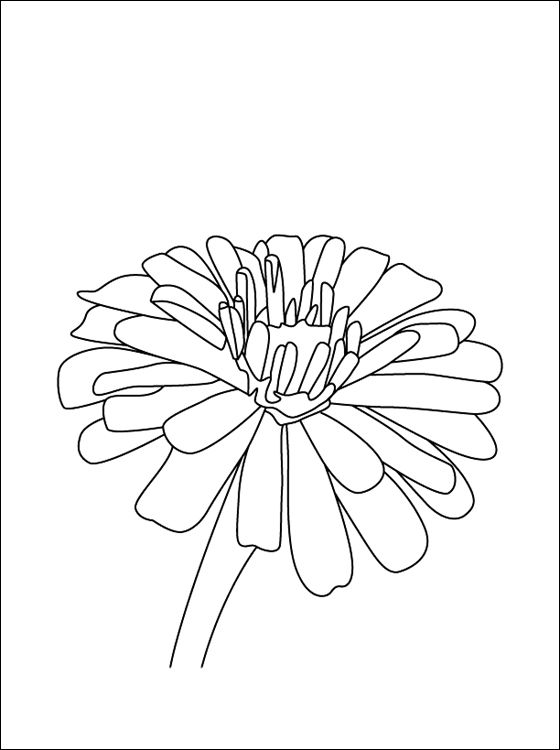 Flower Page Printable Coloring Sheets Zinnia Coloring Page To