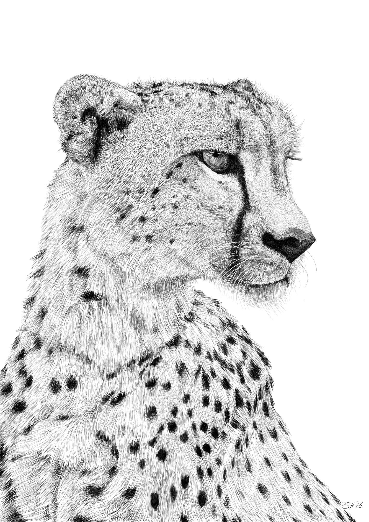 картинки гепарда как нарисовать дед мороз