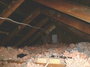 Attic Cleaning Services Attic Cleaning Sanitizing Air Tight Sealing Rodent Removal Pasadena Air Duct Rodent Removal
