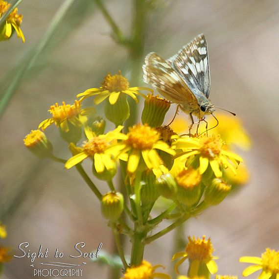 Country Wall Decor white butterfly photography by SightToSoul | Fine ...