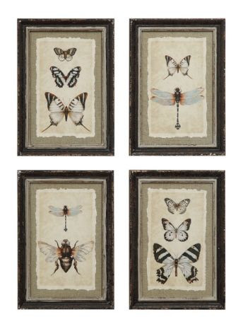 Wall Art Designs Framed Sets Erfly And Dragonfly Entomology Bee Stunning