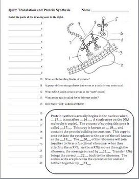 This Product Contains 3 Different Quizzes That You Can Use As You Are Teaching A Unit On Dna Rna And Protein Biology Worksheet Study Biology Biology Classroom
