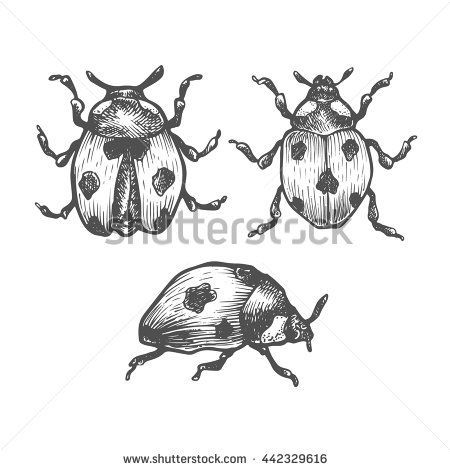 hand drawn set of ladybug in different poses set of