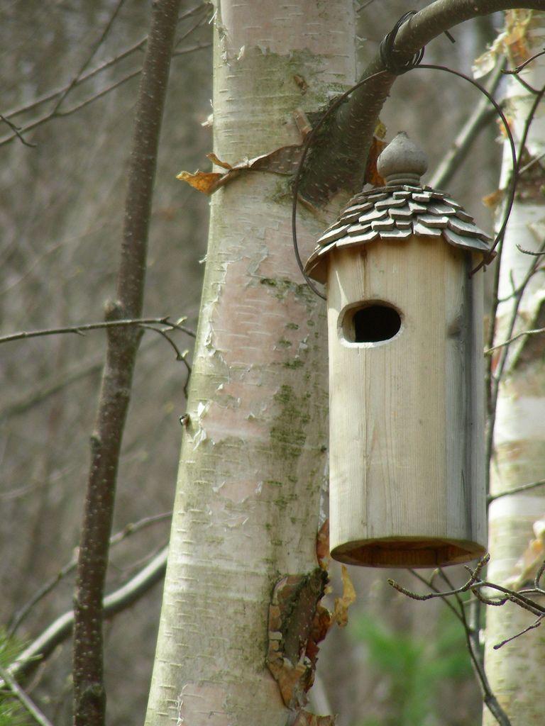 Birdhouse Bird Houses Pinterest Bird Houses Birds And Bird
