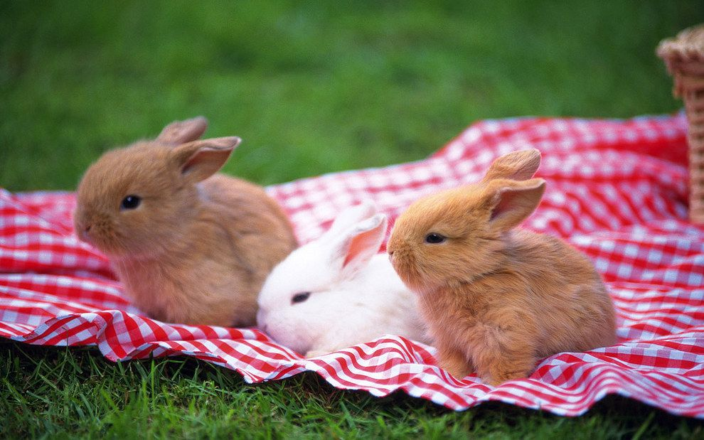 All you ever need to see dwarf rabbit cute bunny