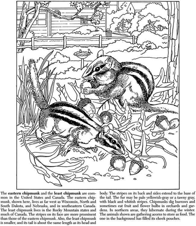 Dover Coloring Pages to Print   home coloring page 1 ...