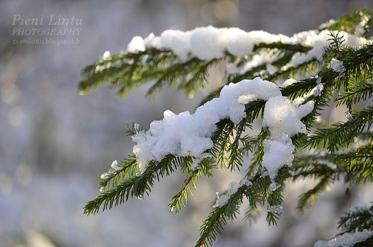 November snow in Finland